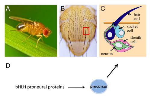 Fig1. External sensory organs